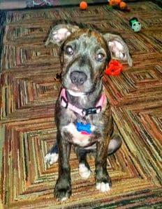 puppy-nymeria_528x684