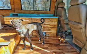 Wander pupdate by nymeria first ride in the van
