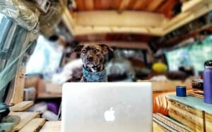 wander pupdates what a dog needs for vanlife