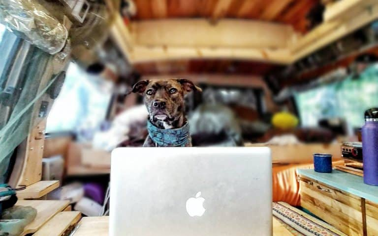 Wander Pupdates by Nymeria: What Does a Dog Need for Vanlife?