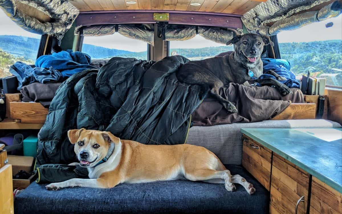 Vanlife with Dogs: Tips, Challenges, and Fun on the Road on insulated dog house for 2 dogs, pet strollers for 2 dogs, dog house for two, dog beds for 2 dogs, dog house building for large dogs, dog house plans for 3 dogs, dog house designs for 2 dogs, outdoor dog houses for 2 dogs, cross breed dogs, top 10 house dogs, dog house plans for 100 pound dogs, dog house kits for 2 dogs, nap room for dogs, dog houses to build yourself, dog houses with covered porches, mansion dog houses 2 dogs, dog loft diy, dog house ideas for multiple dogs, custom sheds for dogs,