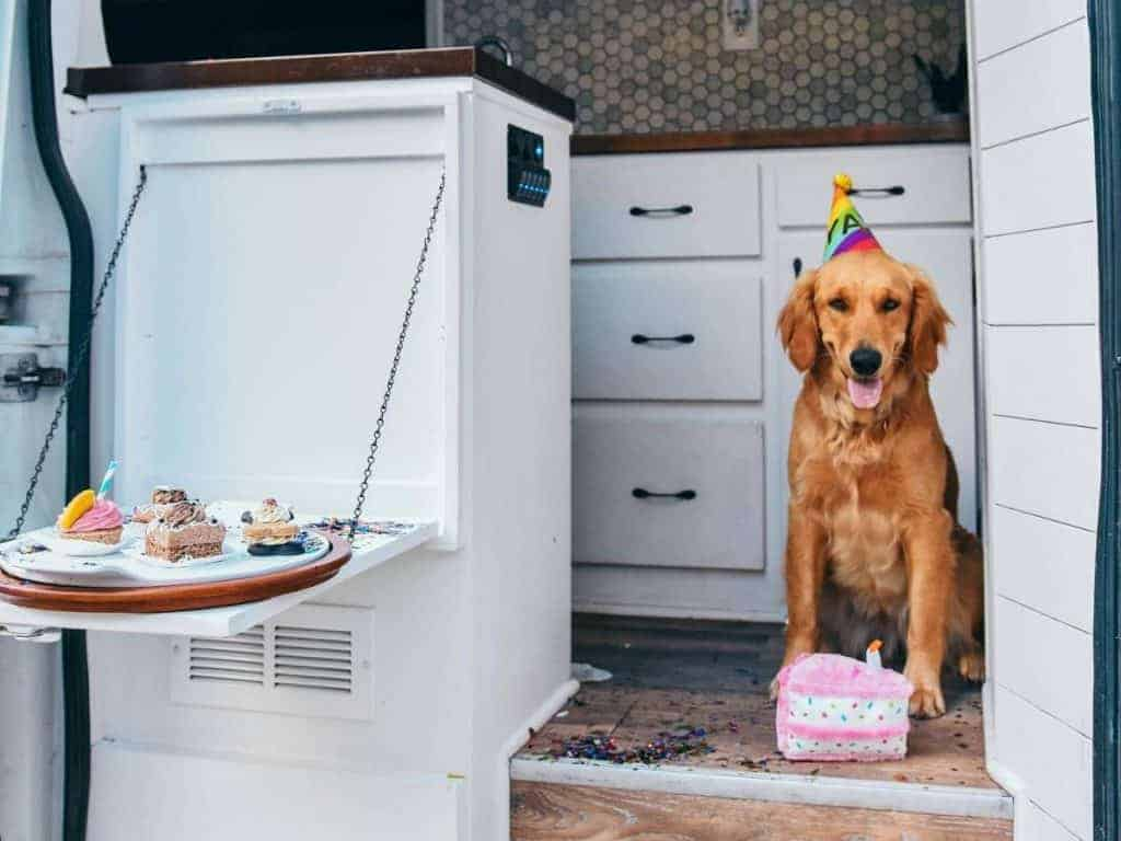Ella sits with a dog toy cake and a party hat on inside the van. Next to her, a flip down table holds plates of sweets.