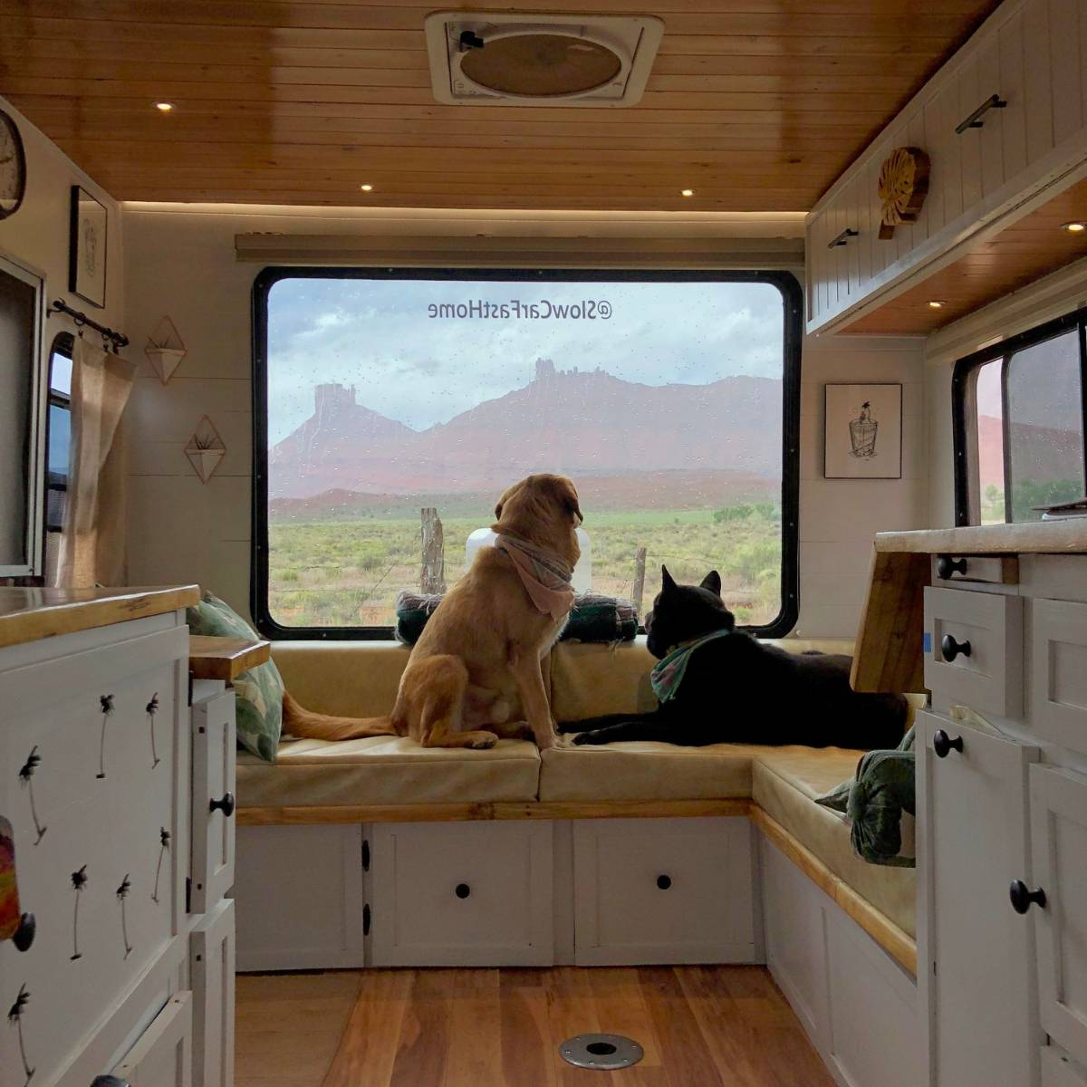 Dogs looking out back window of Toyota RV